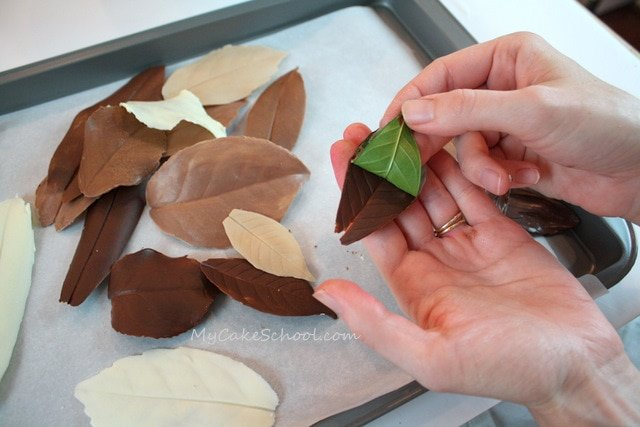 Making Leaves For Cake Decorating : Autumn Cake- Chocolate Leaves!~Blog Tutorial My Cake School